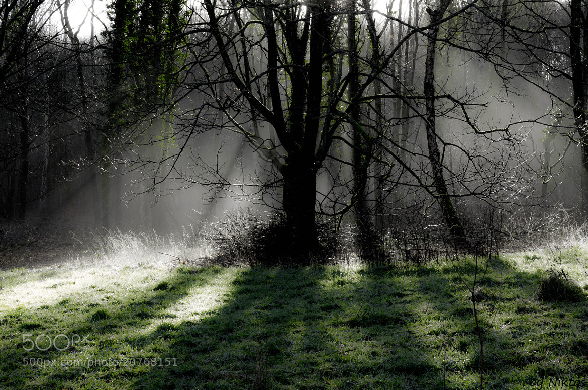 Photograph Tree in rays by Pawel Niktos on 500px