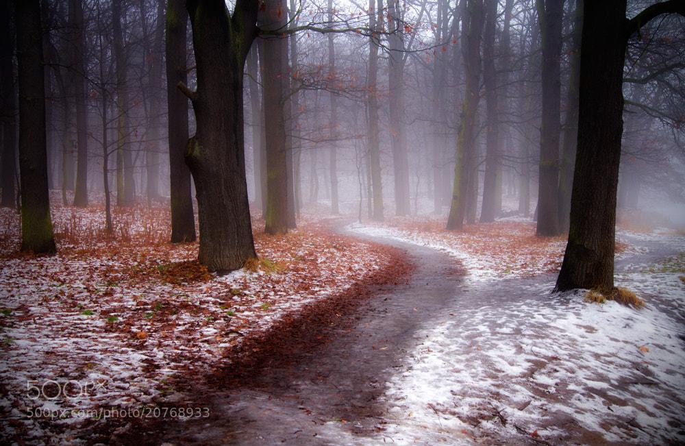 Photograph Misty morning by Magdalena Narloch on 500px