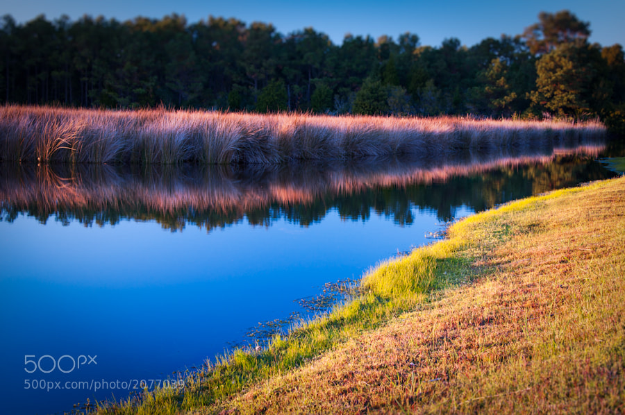 Photograph Reeds of Reflection by Barton Mitchell on 500px