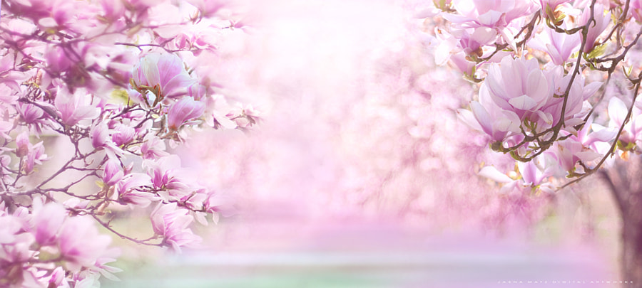 ~ Time of Magnolia ~ by Jasna Matz on 500px.com