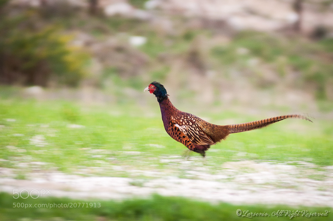 Photograph Fastest by Roberto Flamini on 500px