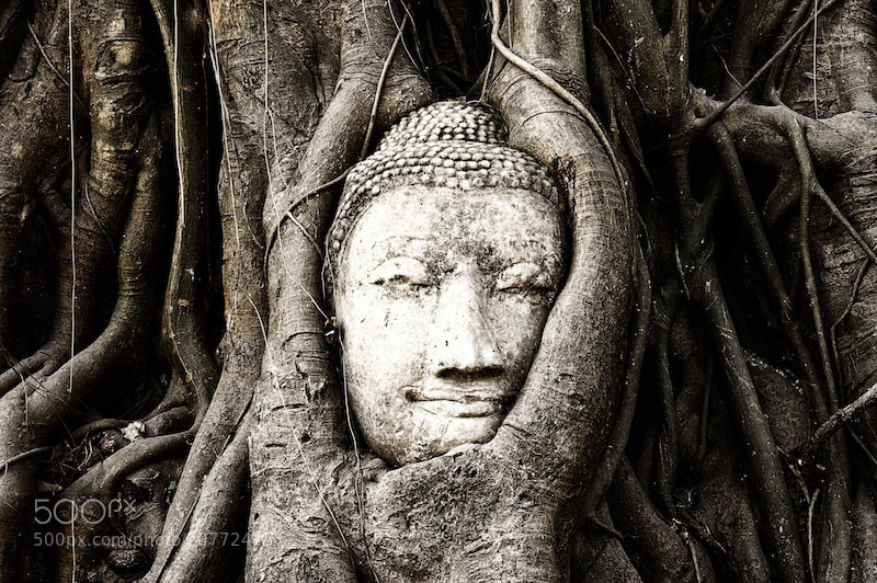 Photograph Buddhas head in Ayutthaya by Marco Palmer on 500px