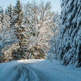 Winter road in Sweden by Stefan Cardell (StefanCardell)) on 500px.com