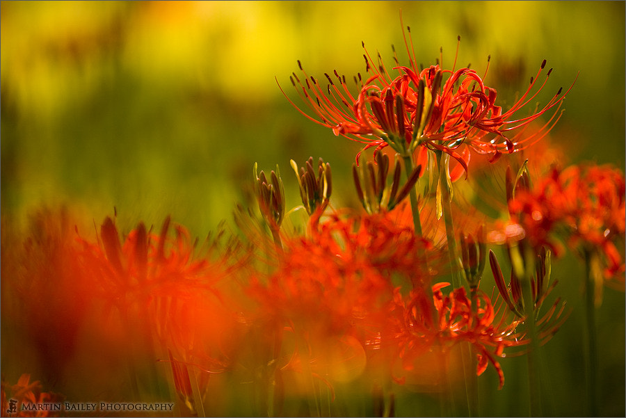 Photograph Equinox Flowers 2006 #1 by Martin Bailey on 500px