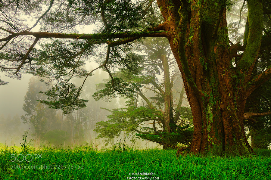 Photograph Branches by Osamh Alshaalan on 500px
