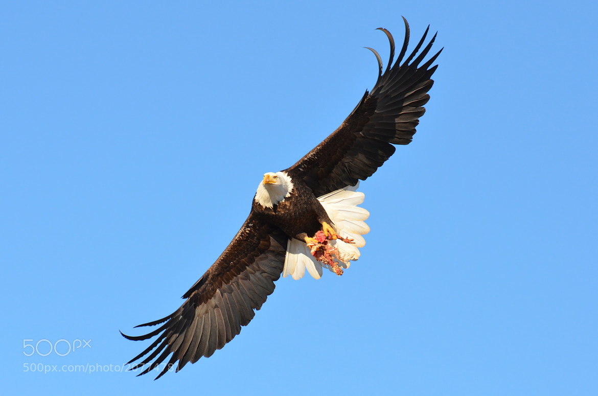 """Photograph """"Show-Off"""" by Peter Brannon on 500px"""