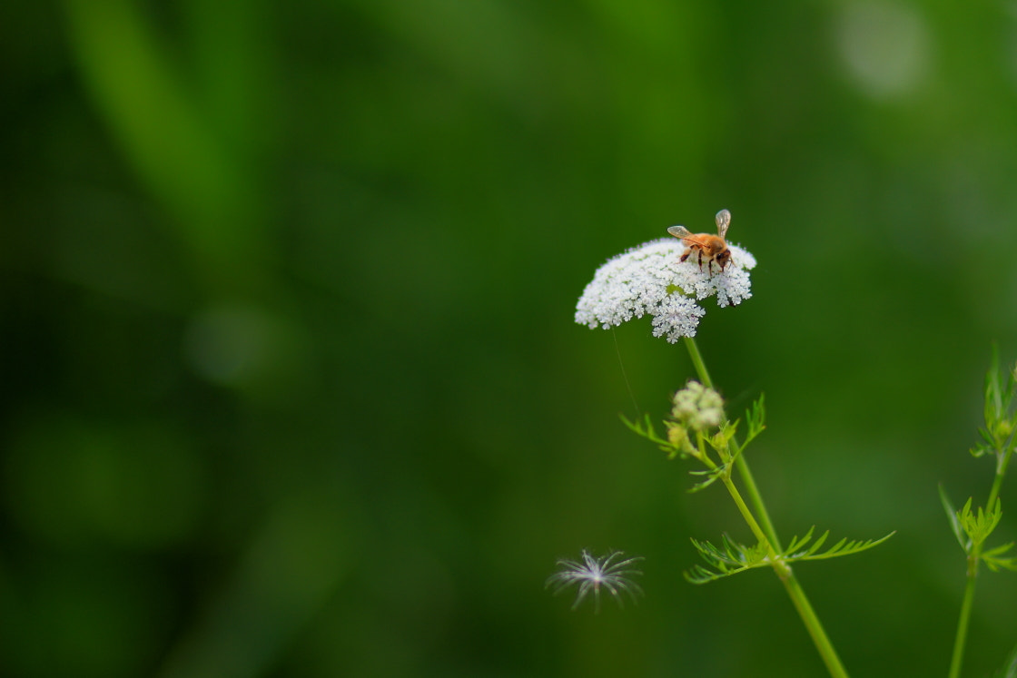 Photograph Bee by Lee Kyeong Hwan on 500px