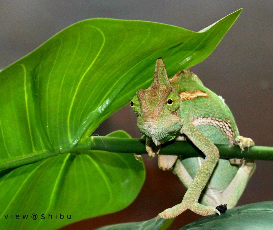 Photograph greeny creature by shibu hasan on 500px