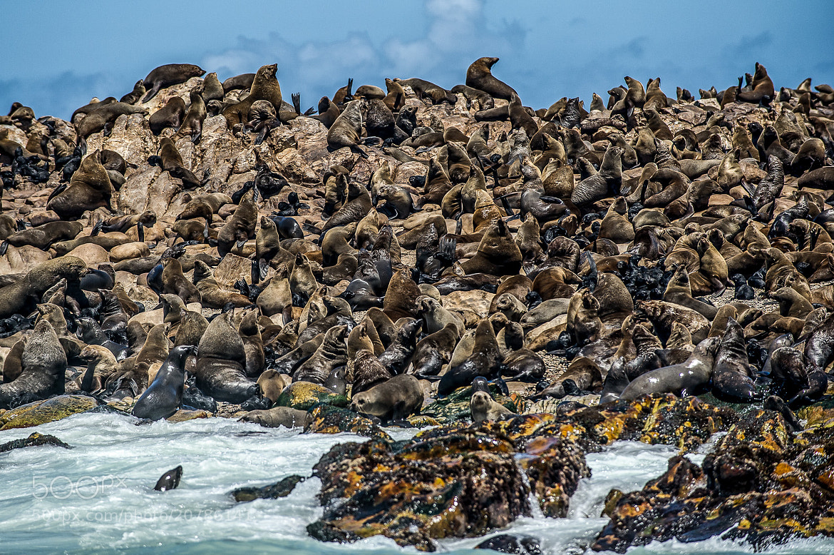 Photograph Seal Land by Paul Todd on 500px
