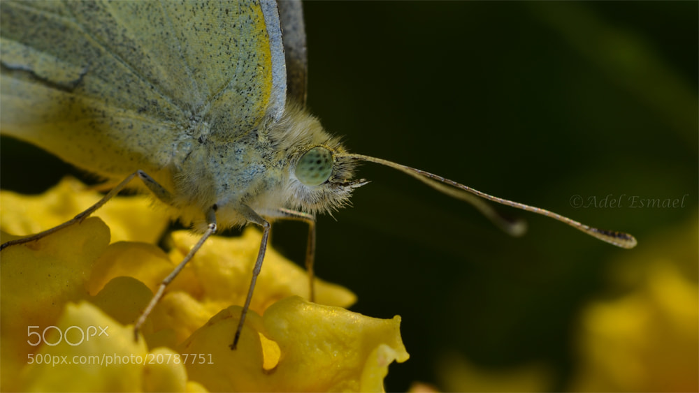 Photograph Butterfly in jealous world! by Adel Esmael on 500px