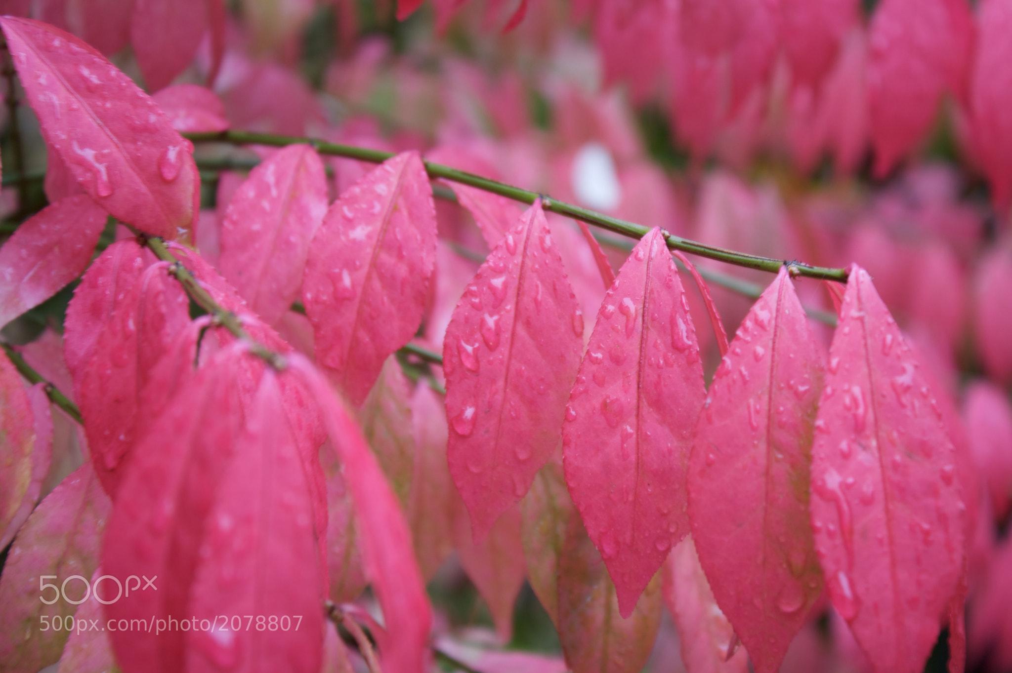 Photograph Autumn by Pradeep Reddy on 500px