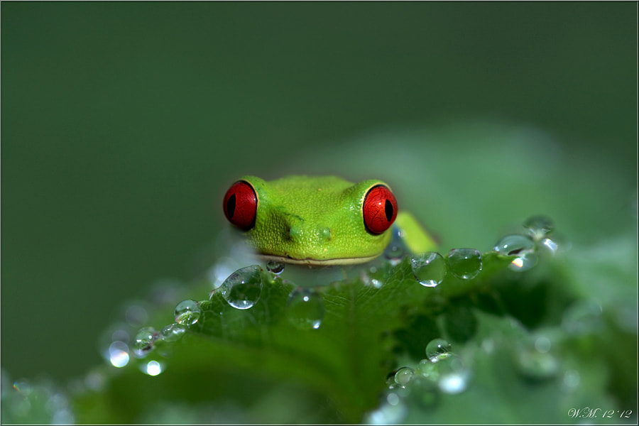Hi... by Wil Mijer on 500px