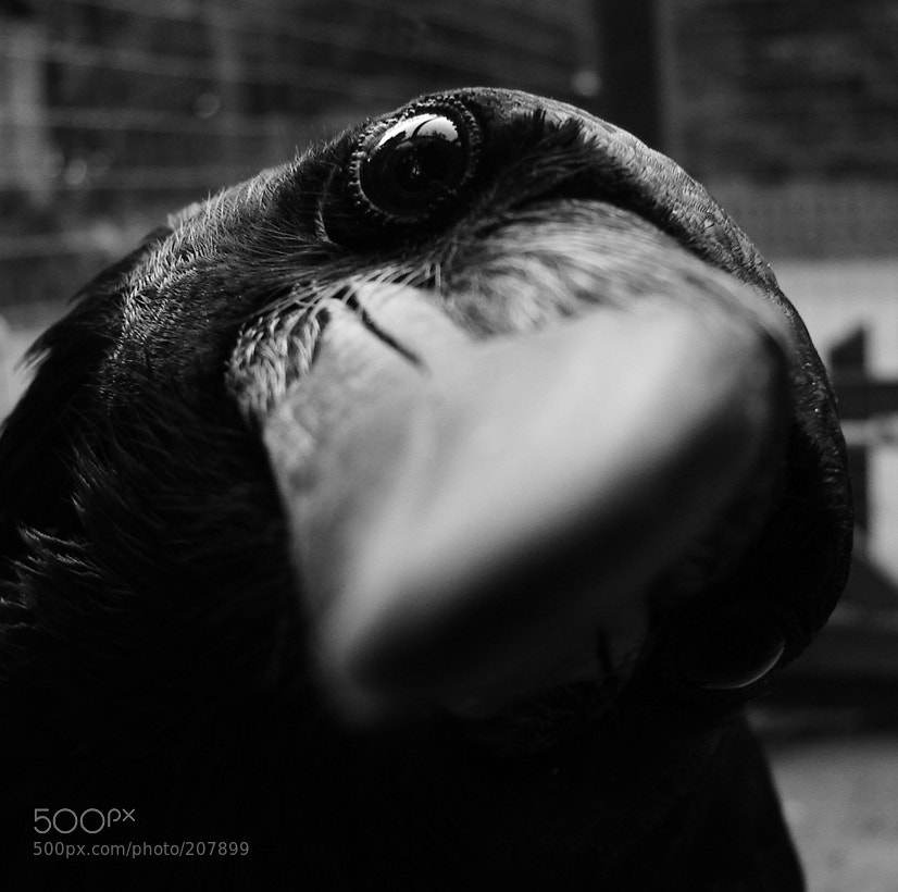 Photograph Inquisitiveness\ Любознательность (limited edition fine art prints available) by Key GROSS (Konstantin Smirnov) on 500px