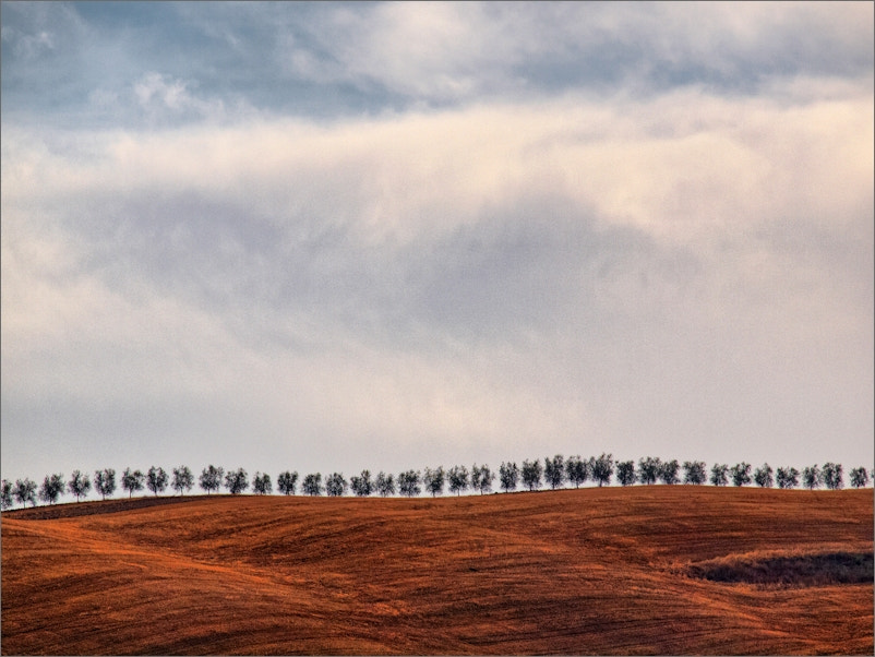 Photograph Row on Red Soil by KPK . on 500px