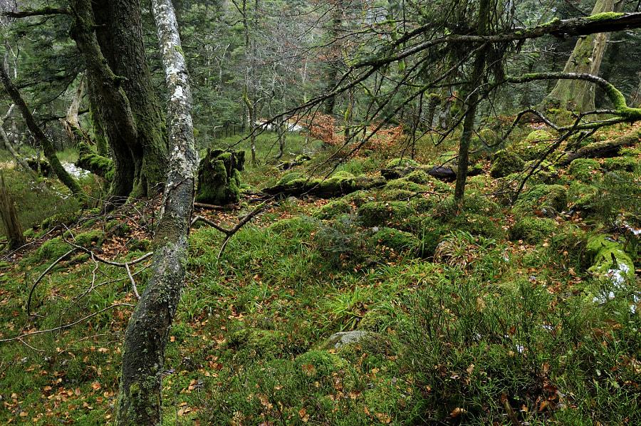 Vieille forêt naurelle-automne