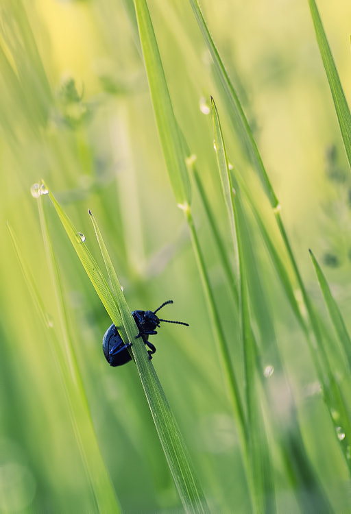 Photograph Grass climber by Stéphane ABCDEF on 500px
