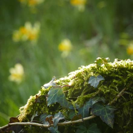 A little spring air
