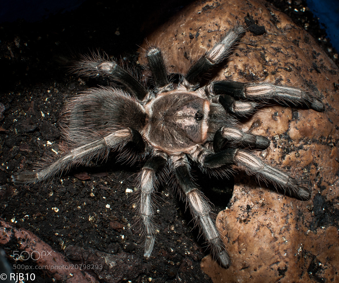 Photograph Bird eating spider  by Rob Bunday on 500px