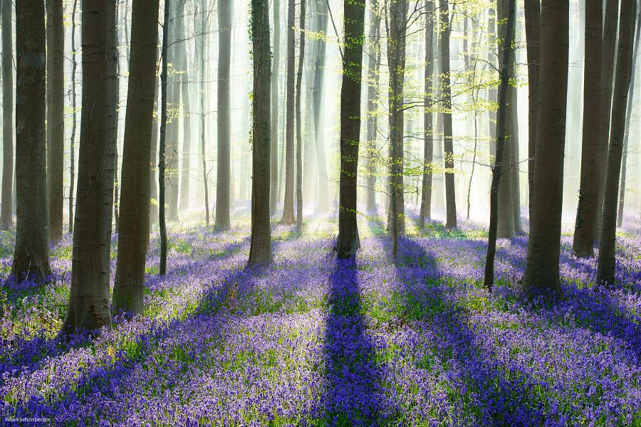 Spring Forest by Kilian Schönberger on 500px.com