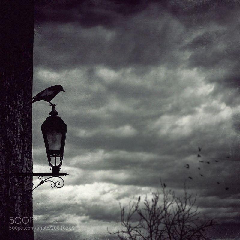 Photograph no way song by Emese-durcka Laki on 500px