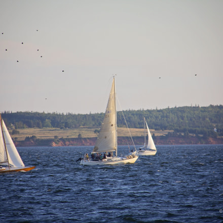 Sailboats in Charlottetown