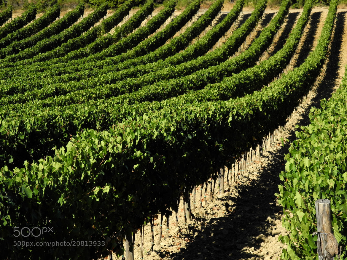 Photograph Chianti  by Angel Cal on 500px