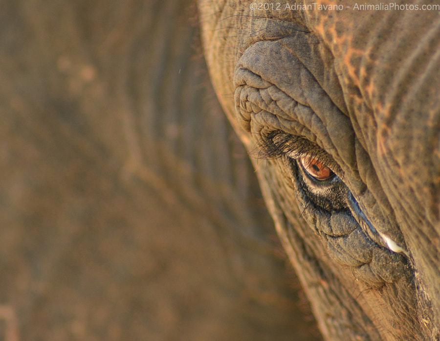 Bull's Eye by Adrian Tavano on 500px