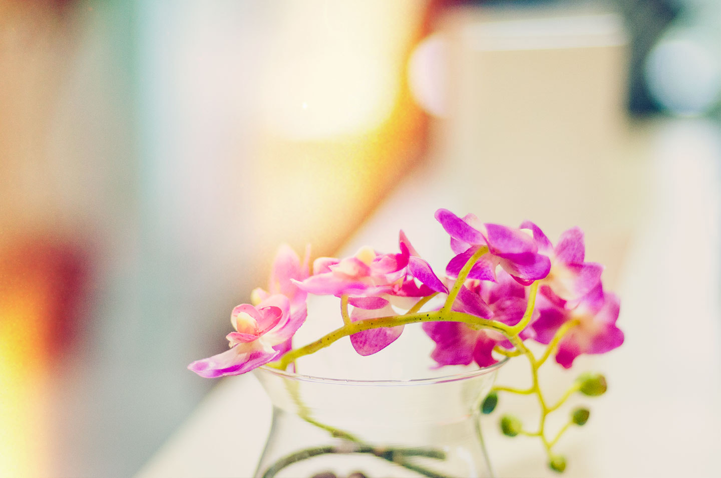 Photograph orchid by Bady qb on 500px