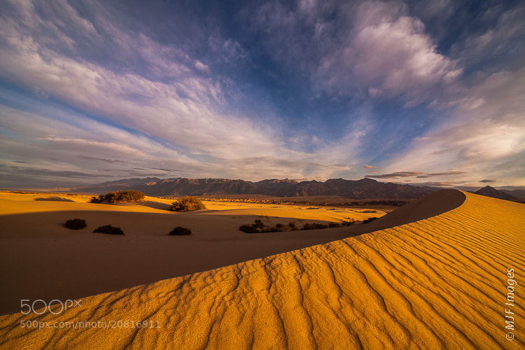 Photograph Golden Dunes by Michael Flaherty on 500px