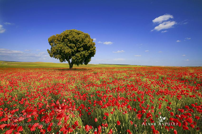 Photograph Spring in the fields by Alvar Astúlez on 500px