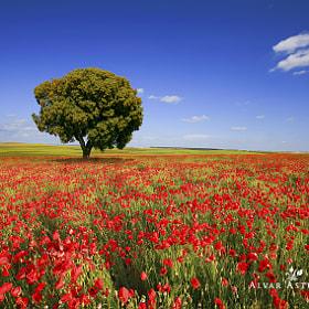 Spring in the fields by Alvar Astúlez (alvar_astulez) on 500px.com