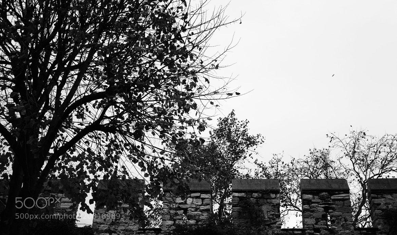 Photograph Black & White Autumn by Sibel Sedefoğlu on 500px