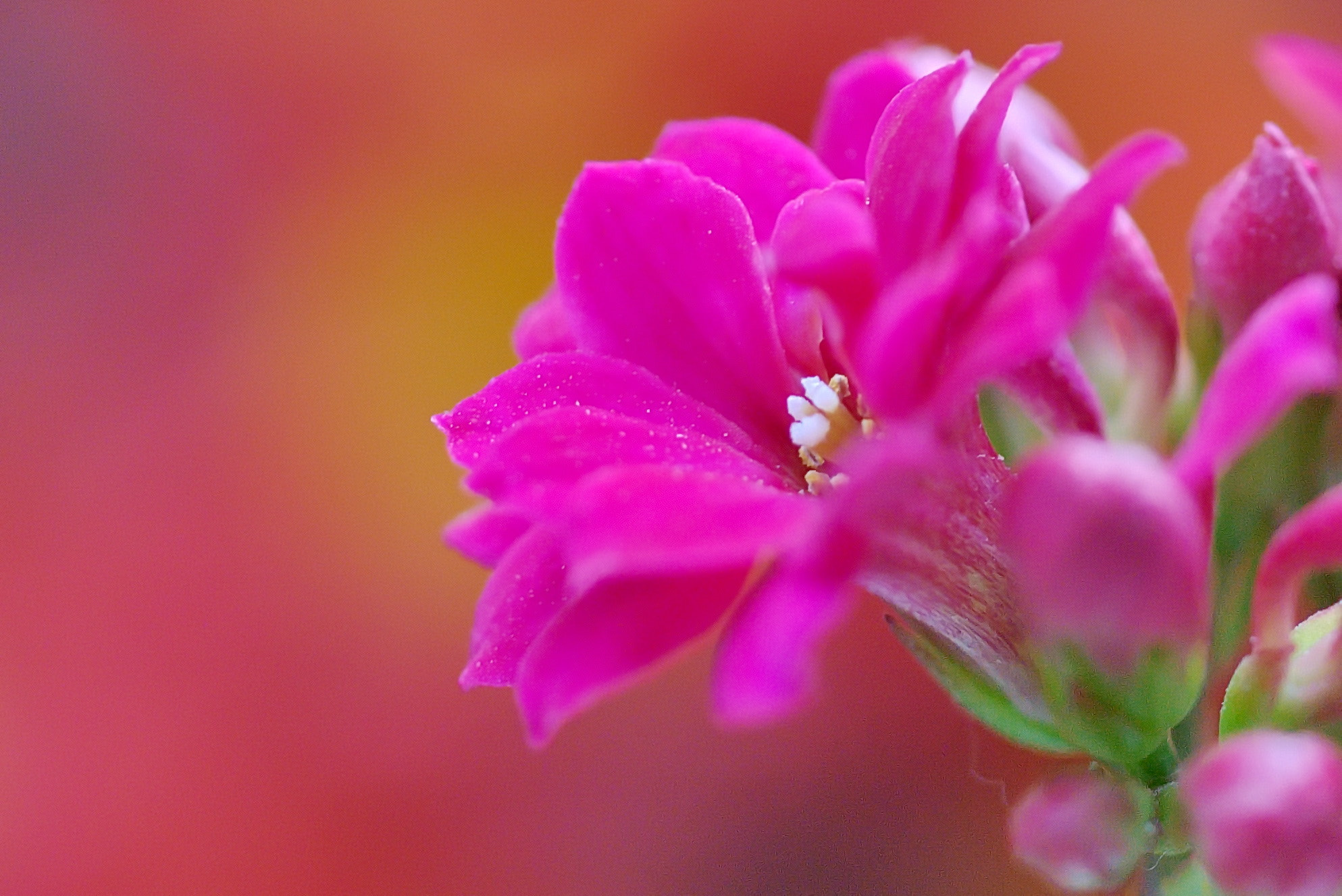 Photograph flower by sgmillionxu2000 on 500px
