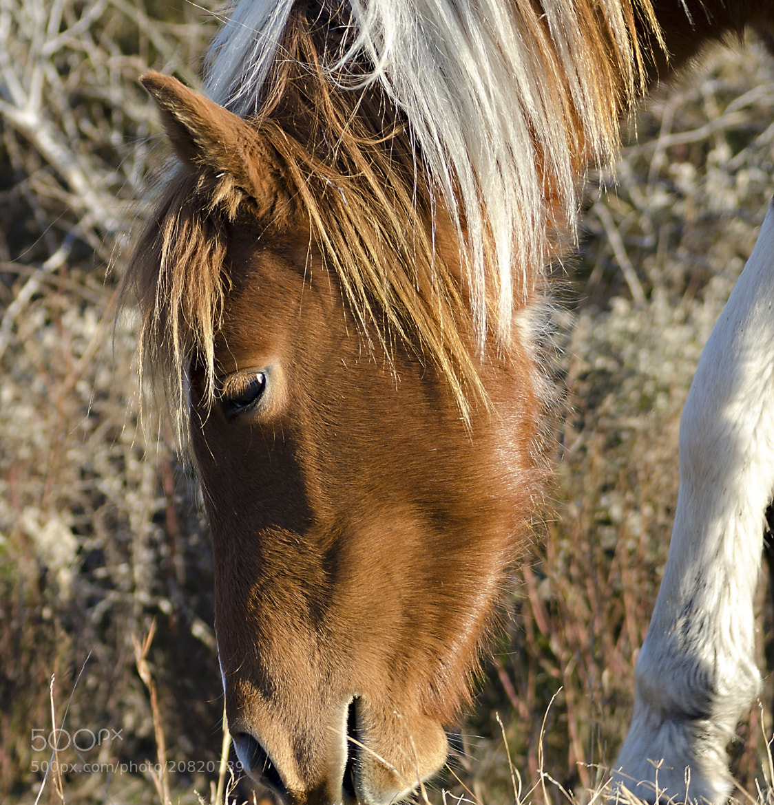 Photograph AI Pony by Paul Valerio on 500px