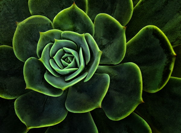 Photograph Succulent by Mike Moats on 500px