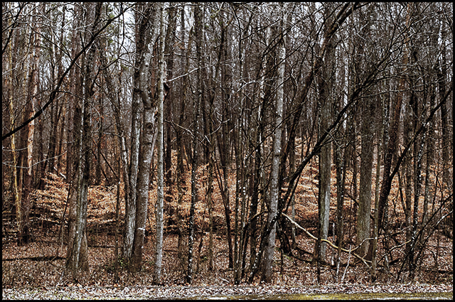 Photograph The Forest by David Stewart on 500px