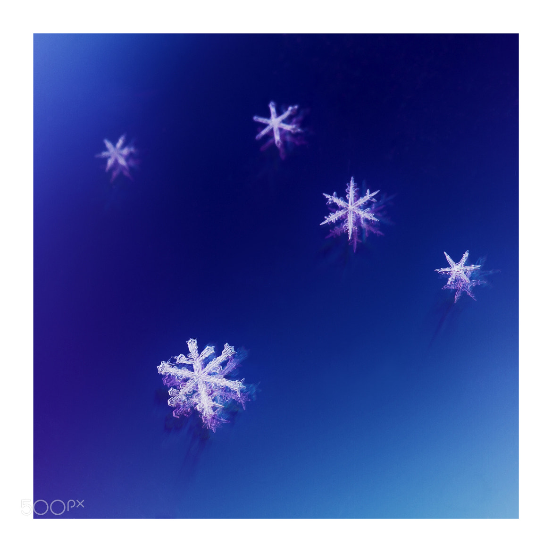 Photograph Frozen Design by Brenton Biggs on 500px