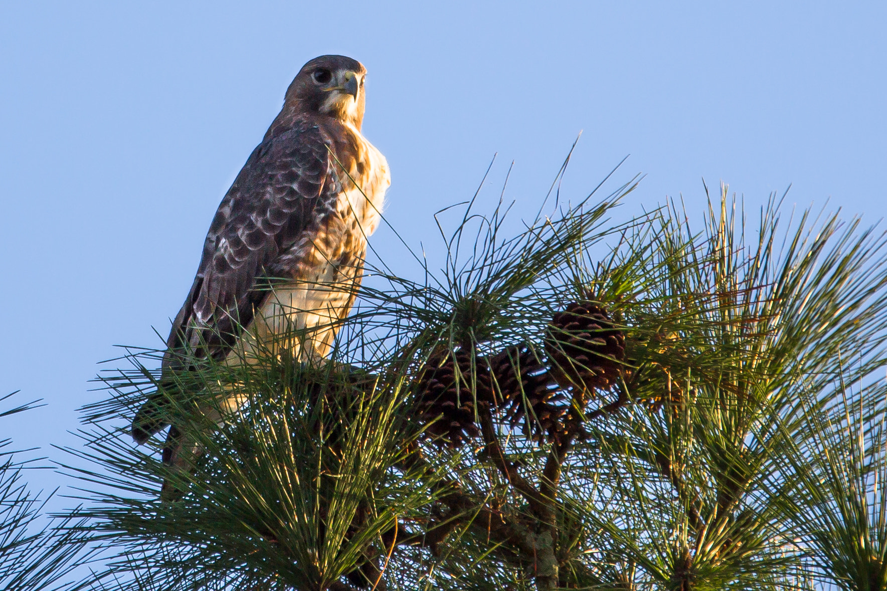 Photograph Falcon by George Bloise on 500px