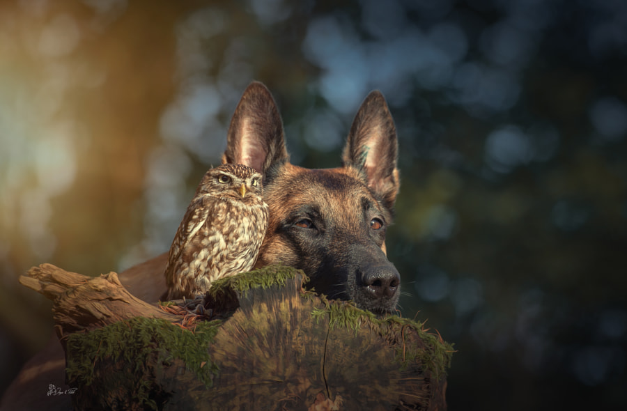 The world by Tanja Brandt on 500px.com