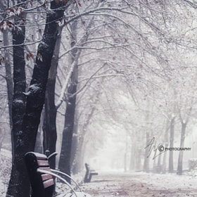 First Snow :-)  by Adel Maghsoodi on 500px.com