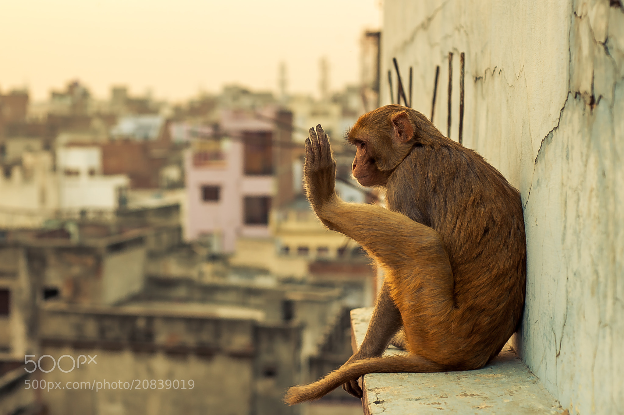 Photograph Hello! Monkey by Seonghwan Jo on 500px