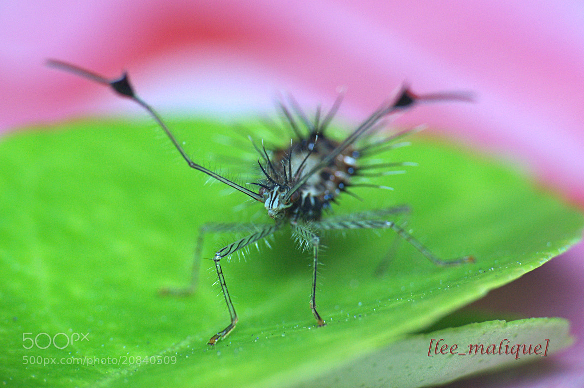Photograph donno id by Mohd Azli Abdul Malek on 500px