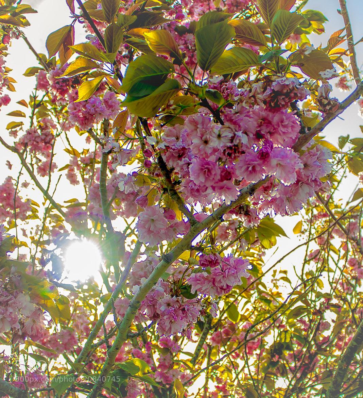 Photograph hi Sun. by Marlon Jay Manuel on 500px