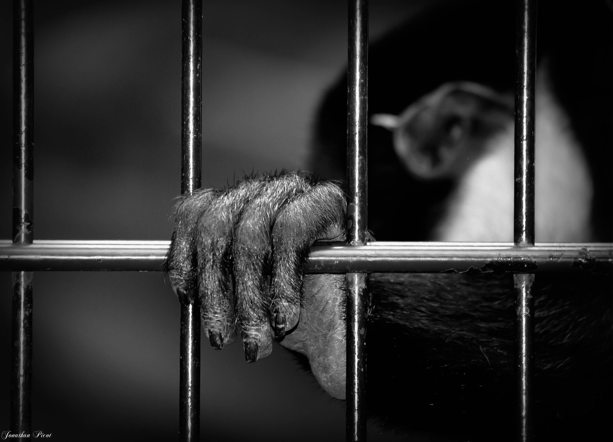 Photograph ...Le prisonnier... by Jonathan  on 500px