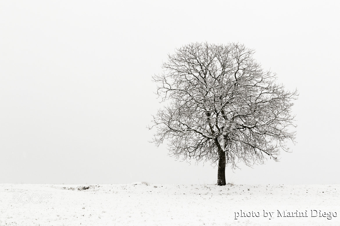 Photograph Solo d'inverno by Diego Marini on 500px