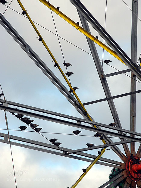 Photograph Starlings getting a free ride on the Big Wheel by uk worker Last Name on 500px