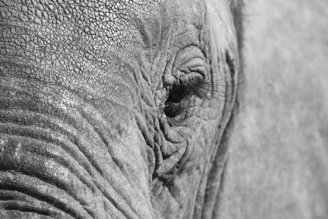 Photograph Elephant, South Luangwa by John Armstrong on 500px