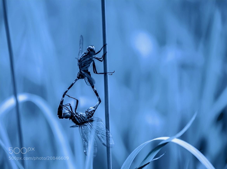 Photograph Love in the dark night. by OKAWA โอ๋กะหว้า. somchai on 500px