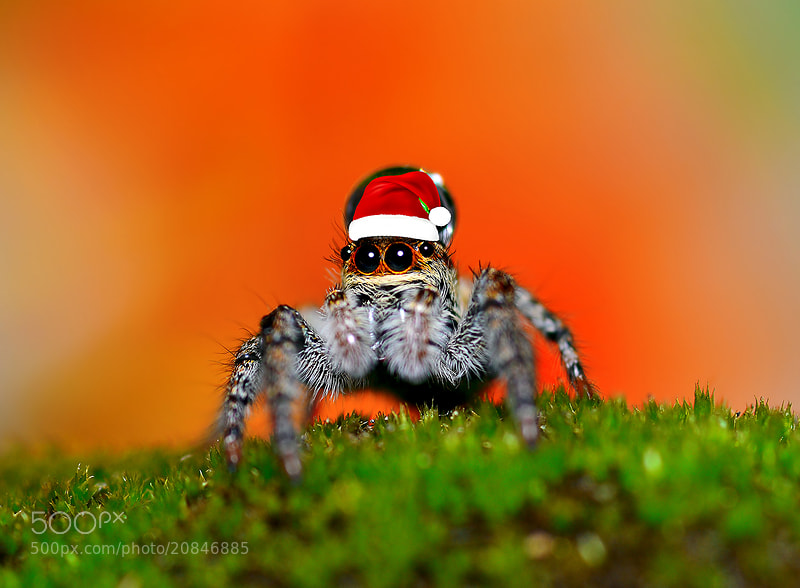 Photograph Merry Christmas..(^_^;) by Bu Balus on 500px