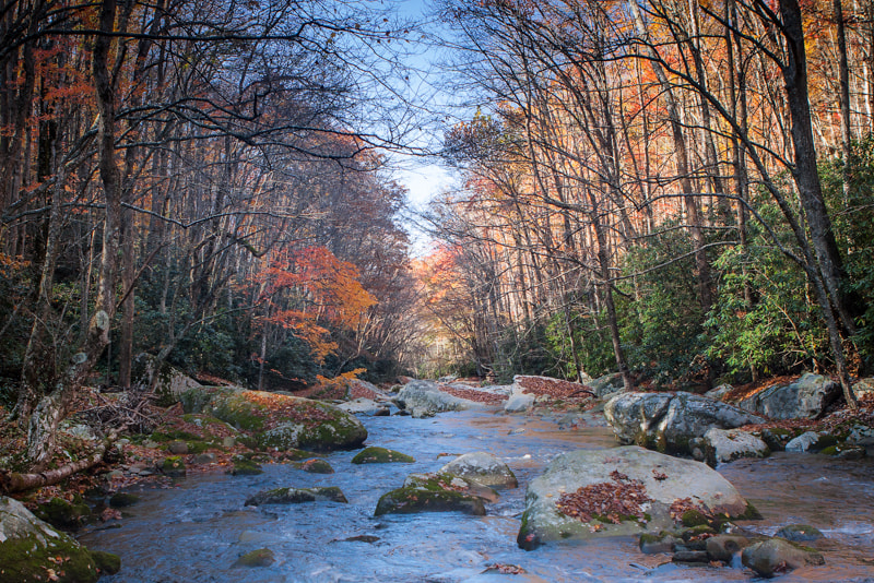 Photograph Elkmont II by Dave Pluimer on 500px